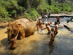 YOGI MAHOUT 1 Day Course