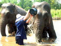 2 Days Elephant Training course with Baanchang Elephant Park