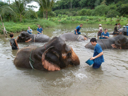 3 days Elephant Mahout Training at Baan Chang Elephant Park