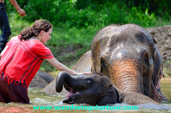 3 Days Mahout Training Course at Elephant Camp