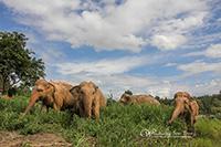 Mae Rim Elephant Sanctuary Half Day Morning