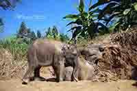 Mae Rim Elephant Sanctuary Half Day Evening