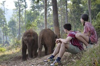 Elephant Jungle Paradise Park Half Day Mornning