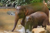 Elephant Jungle Paradise Park Half Day Afternoon