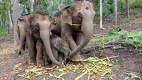 Elephant Jungle Paradise Park Full Day