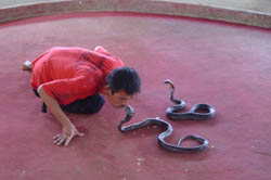 It is home to various kinds of snakes of Thailand and conducts snake breeding.