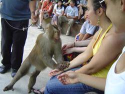 Touching and Playing with the Monkey encloser