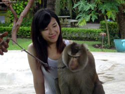 Touching and Playing with the Monkey encloser at Monkey Centre in Chiang Mai, Mae Rim area
