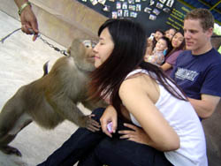 Don't miss your only chance in Northern Thailand to experience these amazing animals. So come along and enjoy with us at Monkey Centre in Chiang Mai at Mae Rim area.