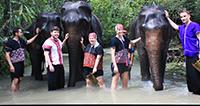 Elephant Discovery Chiang Mai (Bareback riding)