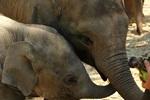 Elephant Jungle Sanctuary (No Riding) Half Day