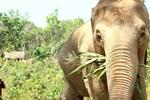 Elephant Jungle Sanctuary (No Riding) Full Day