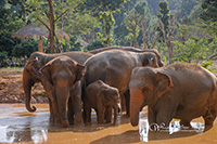 Play with our elephant family as you learn about their behavior and past.
