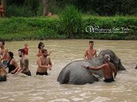 Enjoy bathing with elephants