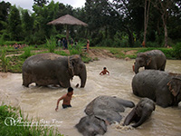 Enjoy bathing with elephants