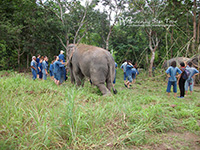 Walk in the jungle with our elephants along a stream surrounded by nature and local farms.
