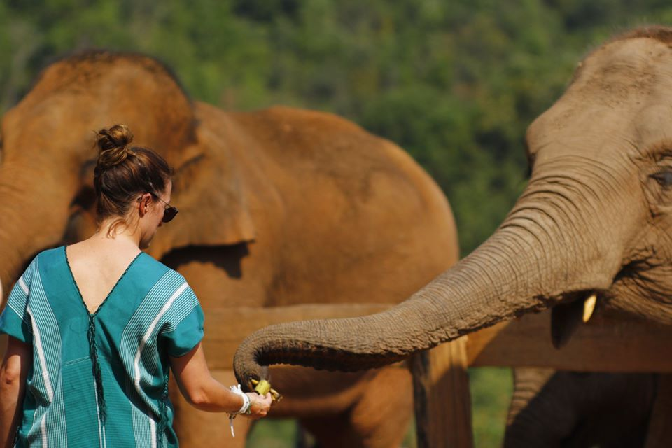 Meet and Feed the elephants in the nature environment
