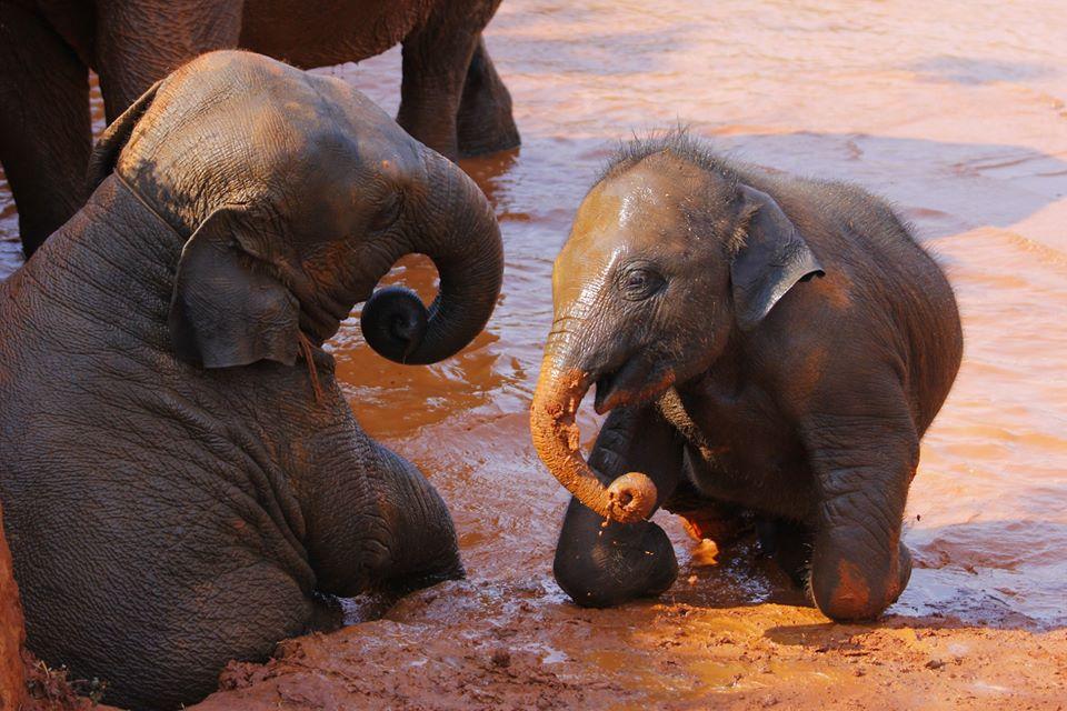 Take a mud spa with the elephants