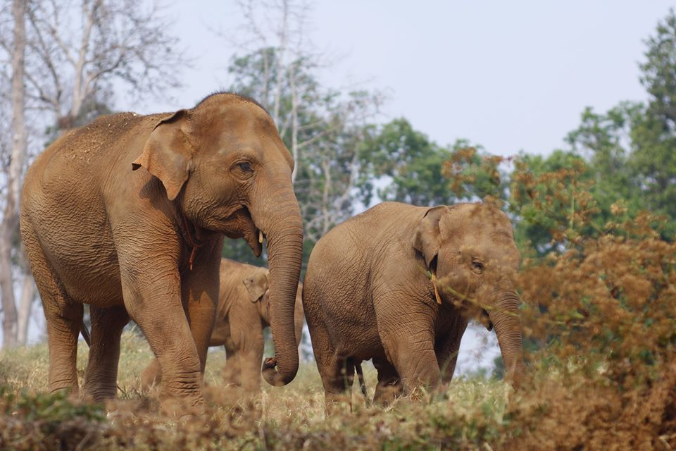 Trek through the jungle to find small groups of gentle elephants as they roam free in their beautiful surroundings.