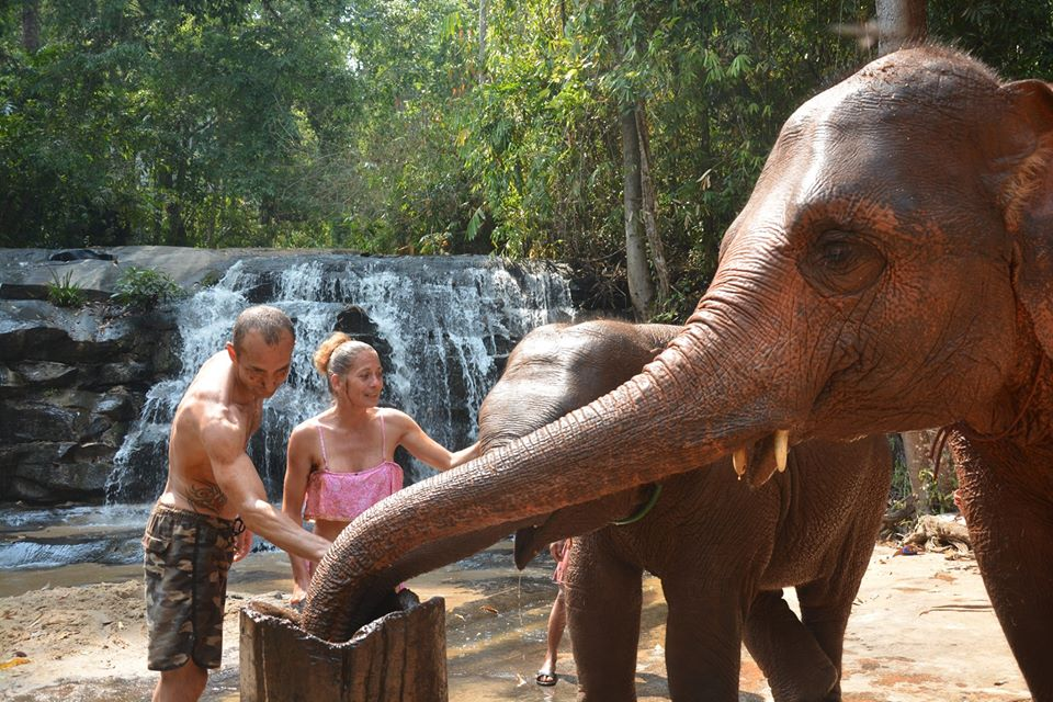 Learn about traditional elephant herbal medicine