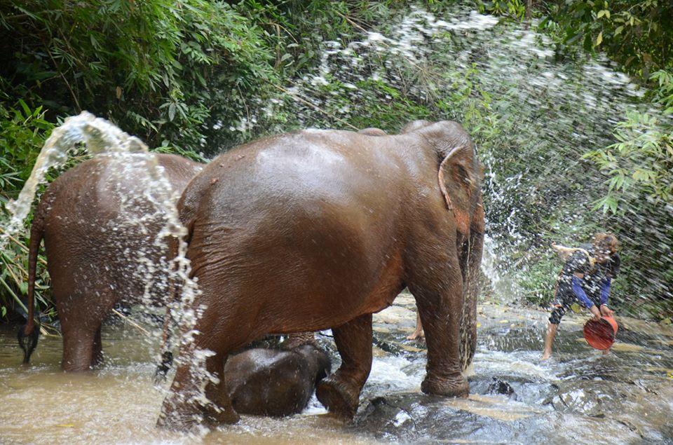 Bathe and brush the elephants in the river and waterfall