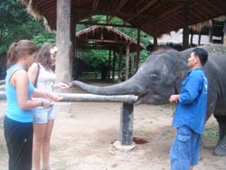 Feeding elephant after the shows