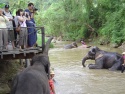 Don't miss a chance to observe the elephants bathing at the two bathing areas on Maesa River before each elephant show