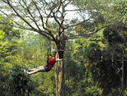 The Flight Of The Gibbon. A new adventure ride in the rainforest outside Chiang Mai in a village called Mae Kompong