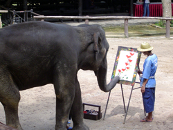 Elephants artist show at Mae Sa Elephant Camp