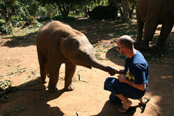 Feed Elephants with favorite fresh foods from the market