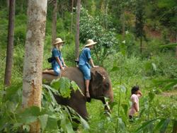we will ride the Elephant through the jungle for 1.30 hrs. Then take the elephant back to the park