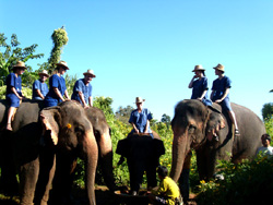 Discover how to communicate with them and learn with the Mahout. Feed Elephants with favorite fresh foods from the market