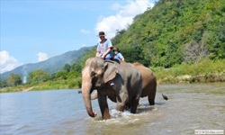 Ride elephant bare back by yourself through the jungle and river, enjoy bath and brush your elephant