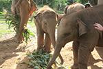 Elephant Interaction