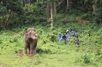 Elephant Experience and Whitewater Rafting (No Riding)