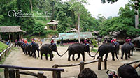 Half Day Tour to visit Mae Sa Elephant Camp & Orchid Farm
