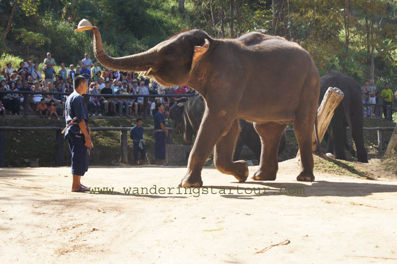 Mae Sa Elephant Show + Lunch + Sankhampaeng Home Industries + Doi Suthep Temple