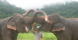 Learning Elephant (Day tour) at Elephant Nature Park