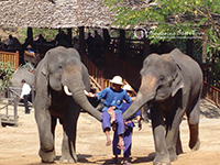 Mae Sa Elephant Camp, Karen Longneck, Stop Tiger Kingdom & Sankamphang Home industry