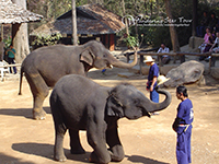Mae Sa Elephant show, Riding Elephant Orchid Farm and Zip line