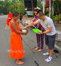 Morning Arm Giving, Doi Suthep Temple & Mae Sa Elephant Camp