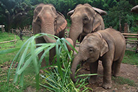 Stop at Tiger Kingdom, Elephant Interaction, Elephant Riding on Bareback & White Water Rafting