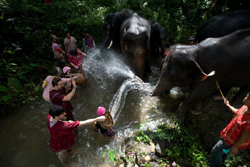 The Elephant Mahout course at Patara Elephant Farm