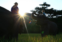 Patara Elephant Farm, Chiang Mai.. Join us for a unique