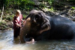 This personalized program will give you great experience to know all about domestic Thai Elephant.