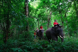 Elephant Mahout Training Course at Patara Elephant Farm.