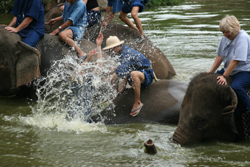 Watch elephants being bathed at the bathing pool