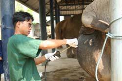 Visit Elephant Hospital