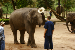 see elephant show and displays of foresty work and other skills