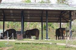 Visit Elephant Hospital in Lampang